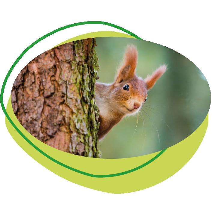 Waldpädagogisches Programm